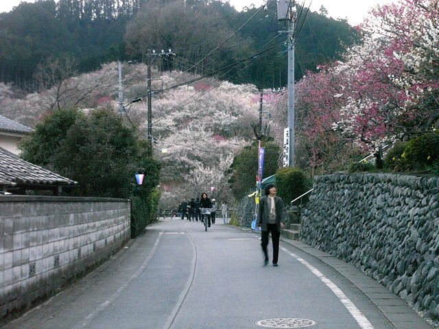 Yoshino04
